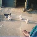 chihuahua_emmi_044