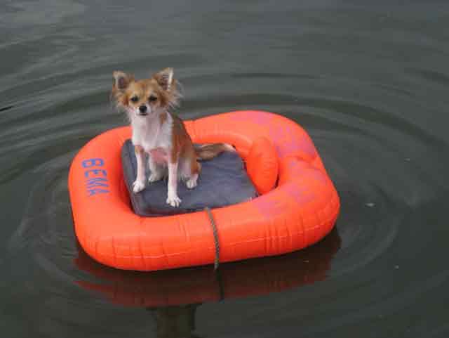 Chihuahua Emmi im Boot